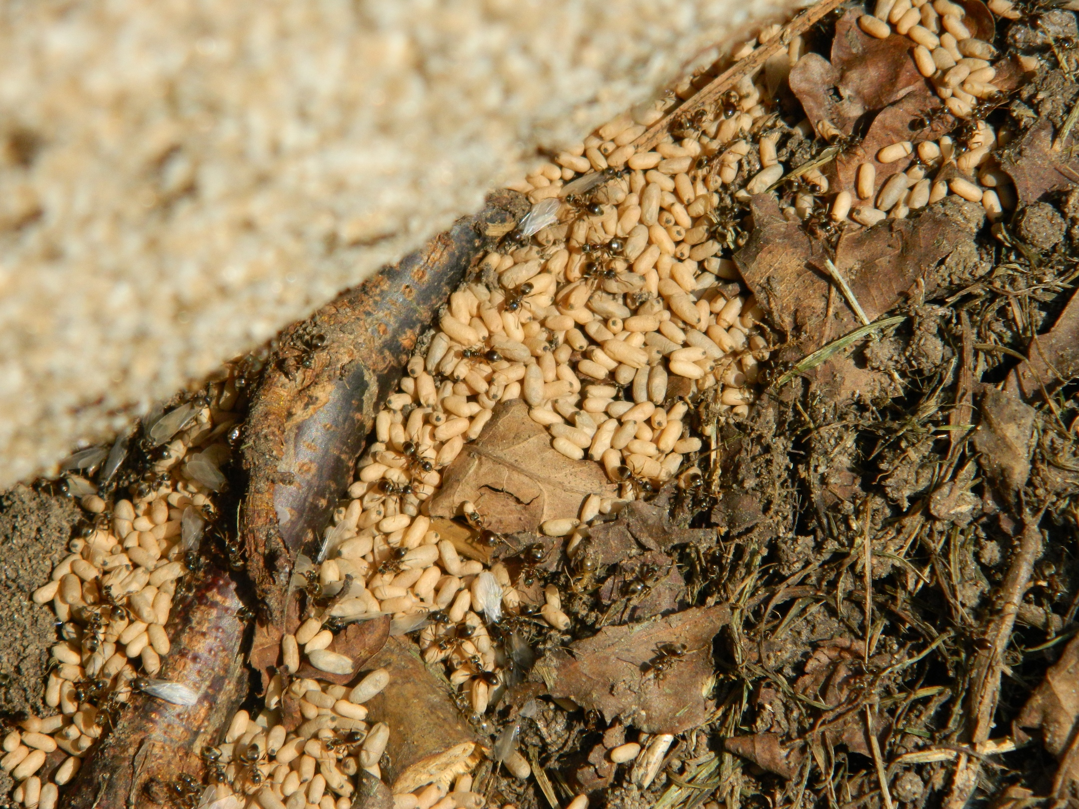 Ants nesting in my compost bin! Alan says live and let live... - Sow ...