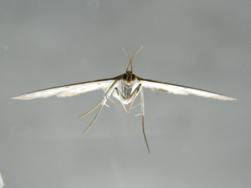 Moth Comin at Yer