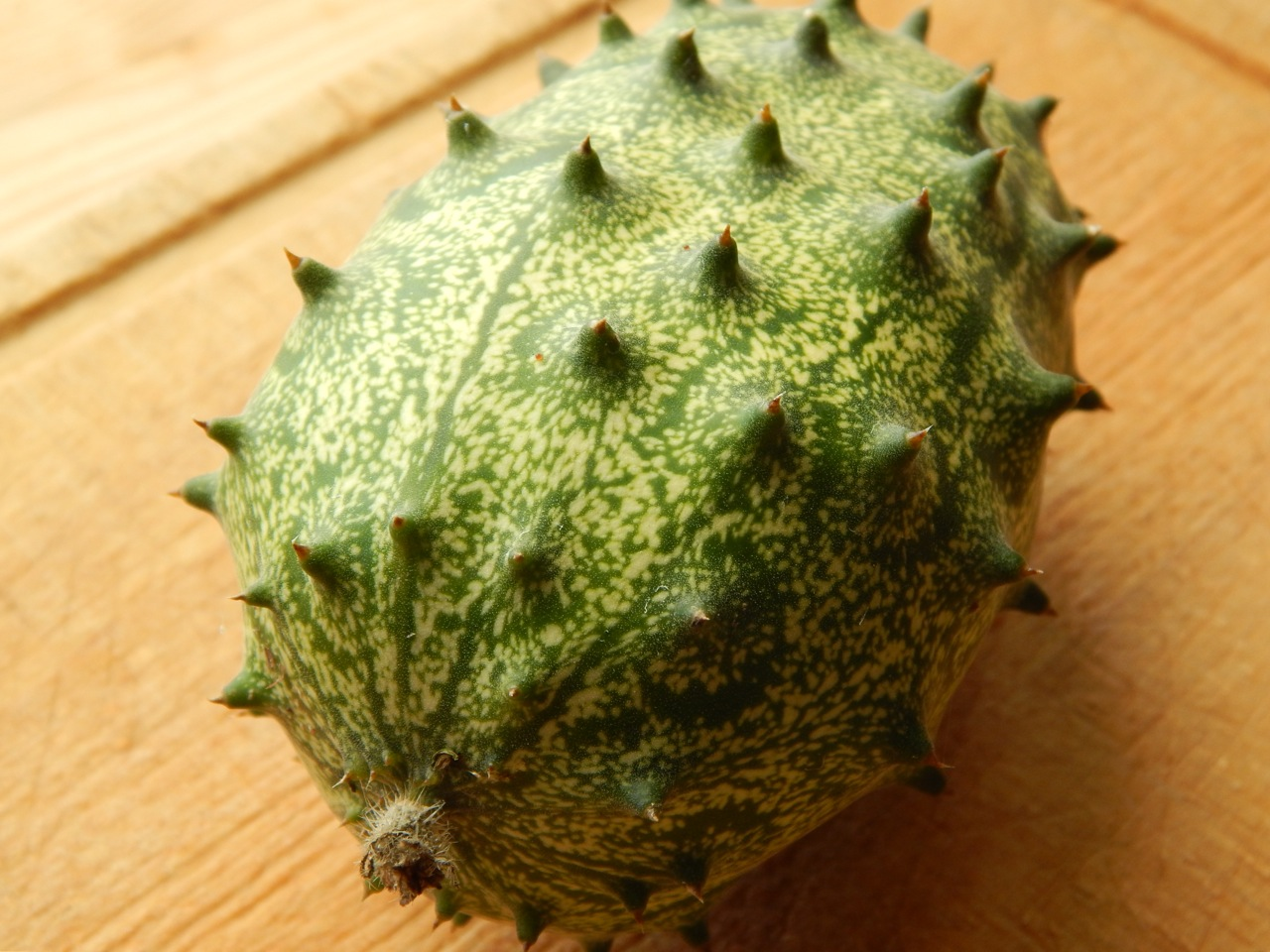 How to Grow a Kiwano or Horned Melon - Sow and So