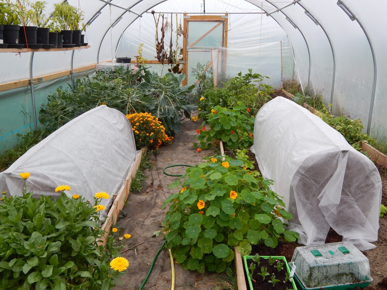 October in the polytunnel sow and so for Domestic garden ideas