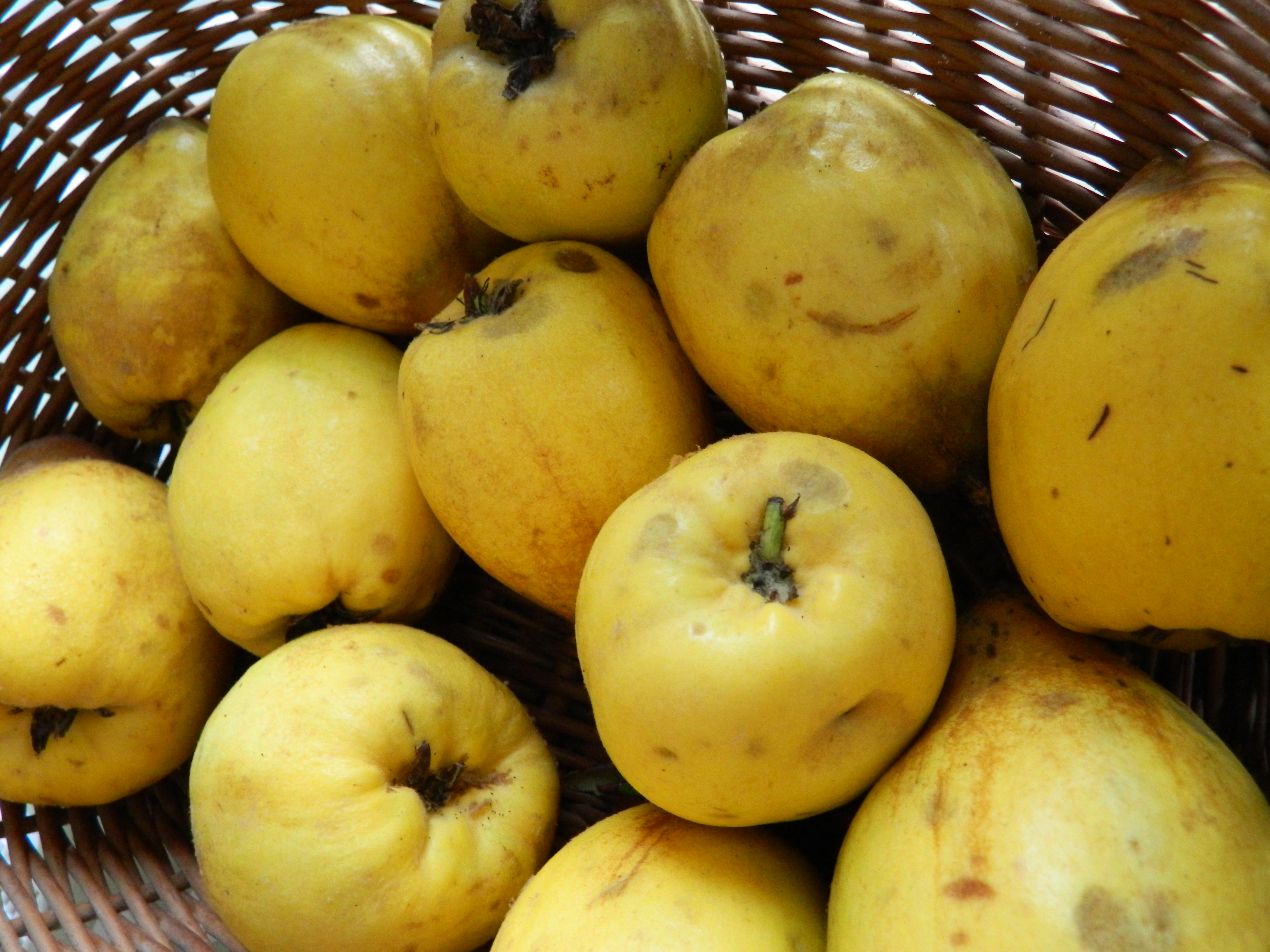 Recipe; Quince Jelly - Sow and So