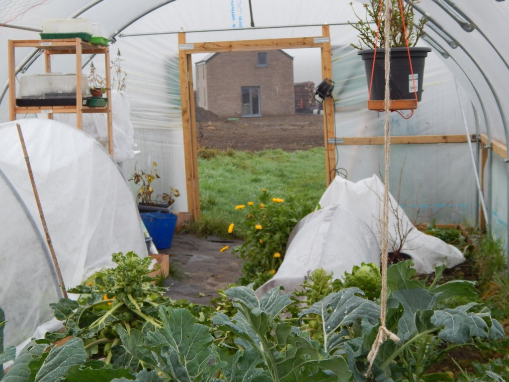 Polytunnel with new house in background
