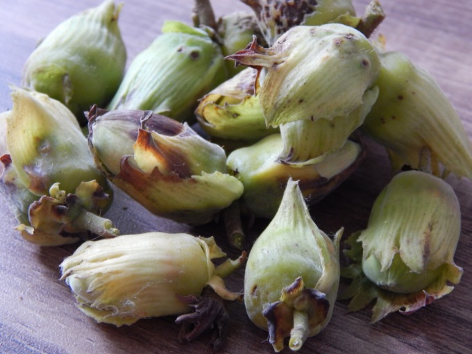 Cobnuts from my own plants