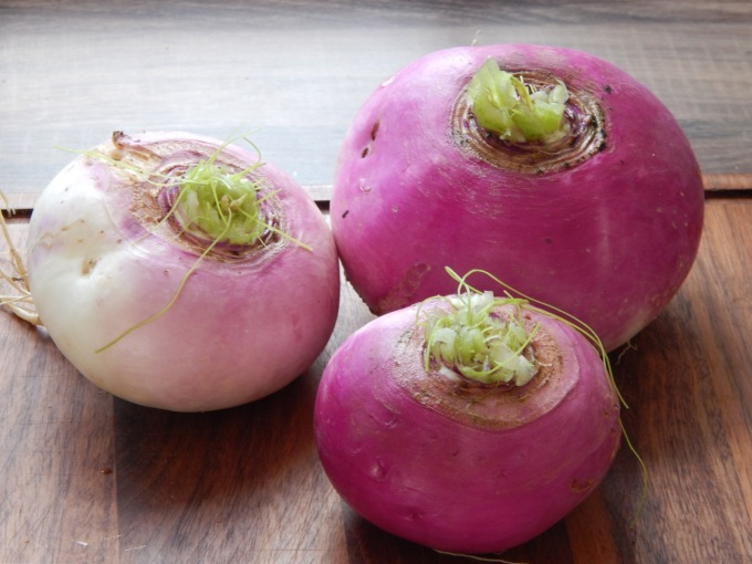 Turnips without leaves