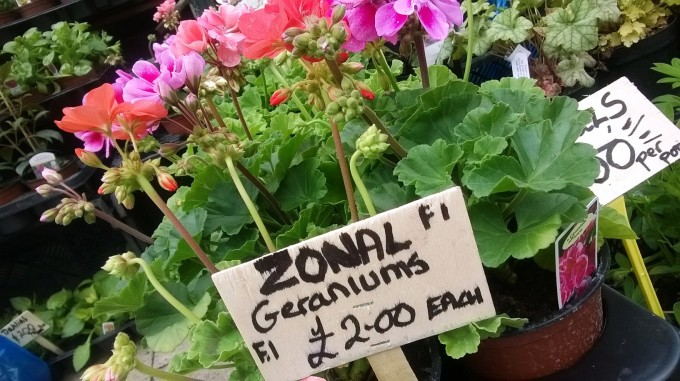Z for ZONAL (2)