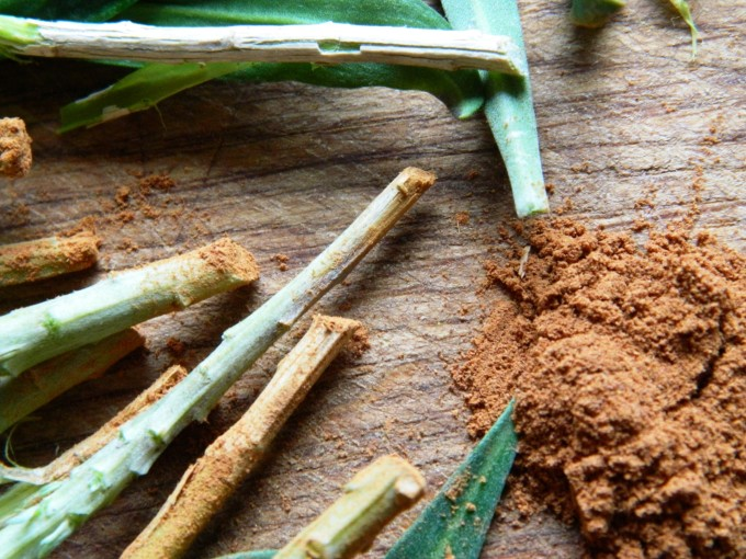 Cinnamon as Rooting Hormone
